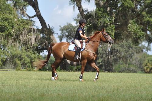 rocking horse 129