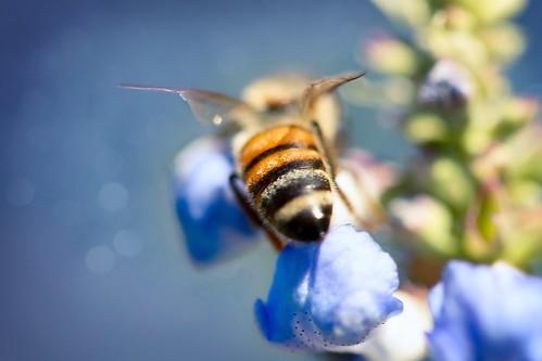 Bee Behind