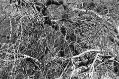 Tree Branches (shaire productions) Tags: trees blackandwhite bw abstract tree art texture nature monochrome photoshop outdoors photo blackwhite branch natural image background branches arts free monotone surface photograph creativecommons downloads download layer grayscale opensource twigs resource layering royaltyfree t4l copyrightfree textureforlayering textureforlayer artistresource