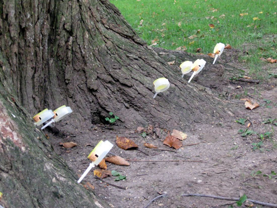 Tree Inoculation (Click to enlarge)