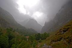 desde bulnes bajo la lluvia (rakelilla/robin) Tags: mountain robin countryside nikon asturias campo montaas rakel picosdeeuropa asturies bulnes rakelilla pnpicosdeeuropa
