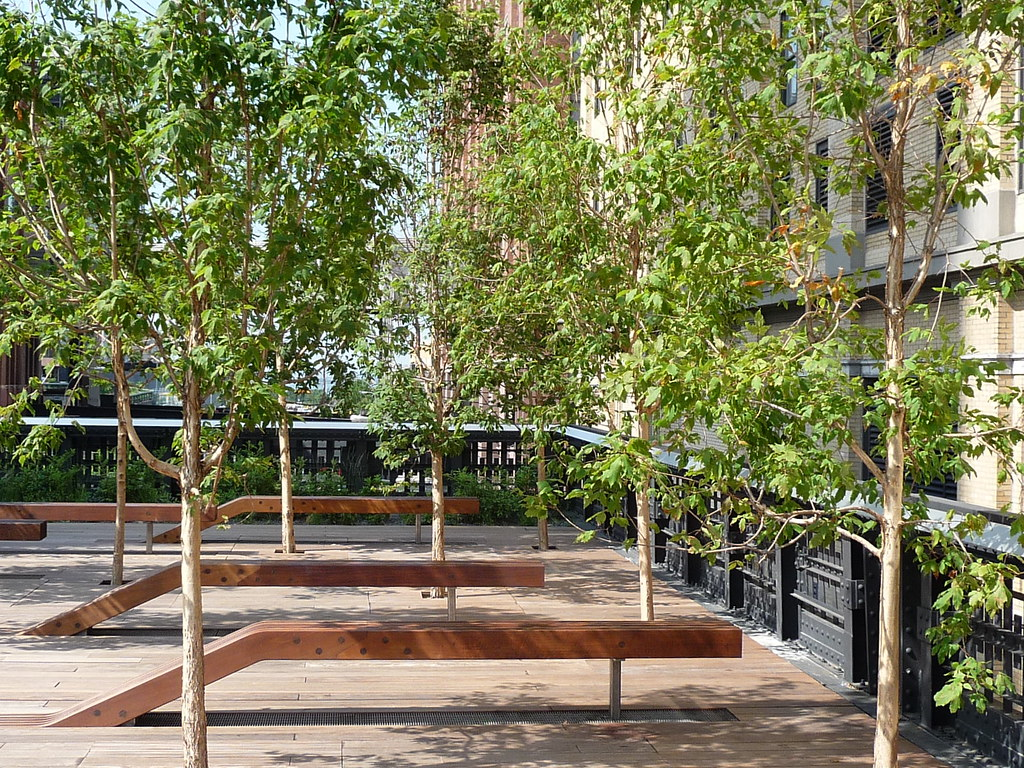 Photo of trees and benches along the High Line