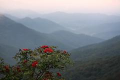 Carolina Mountains (shadamai) Tags: sunset red mountains tree misty evening berries dusk northcarolina blueridgeparkway blueridge flickrchallengegroup flickrchallengewinner