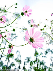 _GYB6179 (kuula2000) Tags: color beautiful photo bravo explore aphoto 4aces flickrsmileys abigfave globalvillage2