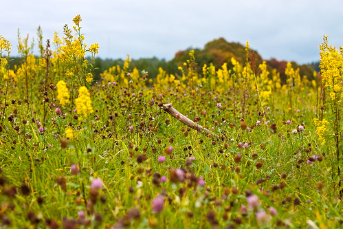 Paskutiniai rudens žiedai | Last autumn flowers