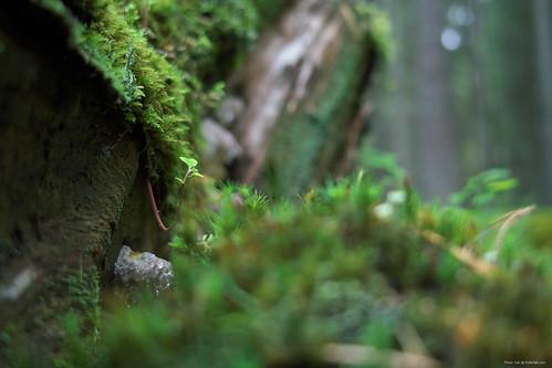 Macro forest thingi