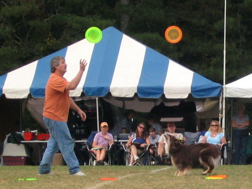 Frisbee Dogs - 4