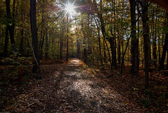 18 octobre 2009 (IMGP3597) (Manu_H) Tags: wood autumn sun canada tree forest automne soleil woods qubec arbre fort bois montrgie parcnationaldumontsaintbruno da1224 saintbrunodemontarville smcpda1224mmf40edalif