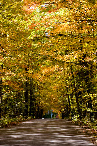 Orillia - Autumn Roads