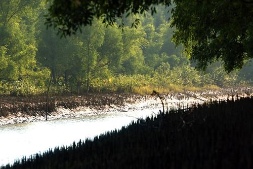 Hironpoint, Sundarban