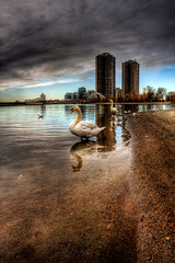 Swan (The Oracle) Tags: toronto bird swan lakeshore soe hdr surrealphotography torontophotographer mywinners colorphotoaward fantasyphotography theunforgettablepictures torontophotography 100commentgroup magicunicornverybest coth5