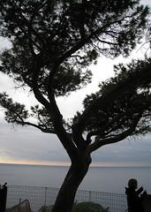 cin29 (Lyrafox) Tags: sea italy water italia cinqueterra italianriviera