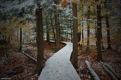 Deep in the Forest (Ben Heine) Tags: autumn trees red orange snow canada fall colors leaves composition forest season leaf bomen nikon colours time ben quebec pov earth path couleurs perspective harmony neige past depth sentier chemin bois heine feuillesmortes montsainthilaire renouvellement benheine twoseasons