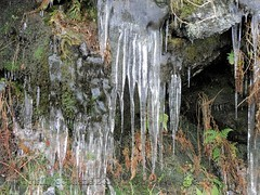 Icicles 1/3