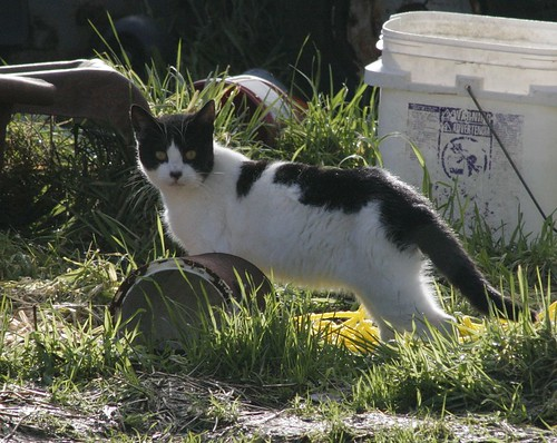 The Reemergence of Cow Cat 2