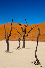 life on mars ((qifei)) Tags: life wood trees winter shadow mars bird colors alberi forest sand desert dune ombra filter duna inverno namibia colori marte vita cpl deserto legno sabbia uccello foresta sossusvlei namib filtro 450d