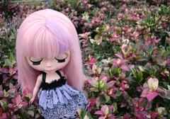 In Pink Garden