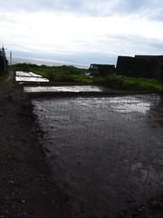 港口部落 石梯坪復耕插秧 舒米如妮的田