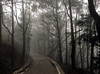 Foggy Road (cowyeow) Tags: hongkong forest mist spooky china chinese asia asian atmosphere misty eerie trees nature composition taimoshan mountain scary creepy road