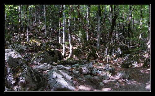 Ordesa - Caos en el bosque