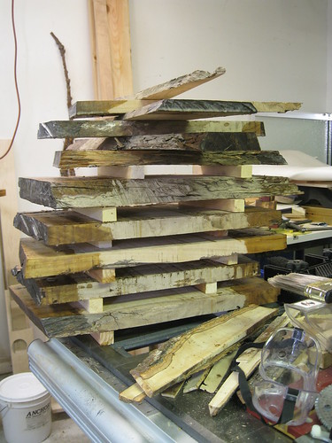 slabs of Eucalyptus, freshly resawn and sealed