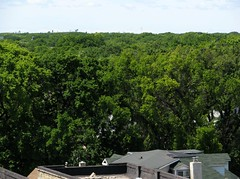Skyline of Trees !