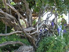 oregon 1 350 (Amythestsparkles) Tags: wood oregon fence gate delphinium burlgallery