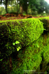 Beautiful moss (Pkamo@Tai) Tags: trip travel flowers macro green nature beautiful thailand moss stair tour fresh step thai chiangmai  puykamo bhubingpalace