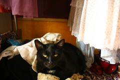 (Carli Vgel) Tags: cats werewolf cat kitties carli vogel carlikirstin sleepinginmydresses ladydarling carlivgel carlivogel