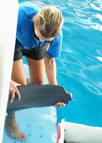 Clearwater Marine Aquarium: Winter's Tail