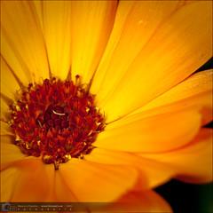 Flores-20090809-125935