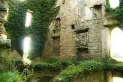 Menlo Castle (2) (JStanfordPhoto) Tags: castle galway ruin ivy menlocastle