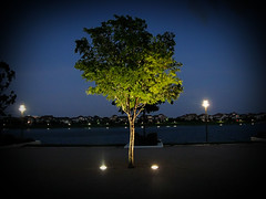 """Great Tree • <a style=""""font-size:0.8em;"""" href=""""http://www.flickr.com/photos/41949692@N07/3951749931/"""" target=""""_blank"""">View on Flickr</a>"""