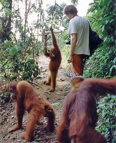 orangutanstrail