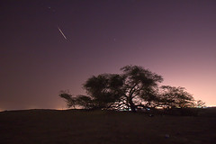 Shooting Star at the Tree of Life (Helminadia Ranford(New York)) Tags: star bahrain google shooting astronomy treeoflife nationalgeography vosplusbellesphotos