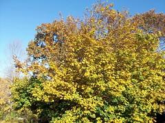 Foliage_102509