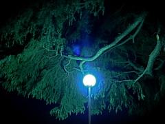 Lonely night (Muchan5) Tags: city tree green nature night lumix evening twilight dusk breathtaking panasonicdmcfx7 abigfave flickrestrellas breathtakinggoldaward breathtakinghalloffame mygearandme mygearandmepremium mygearandmebronze mygearandmesilver mygearandmegold mygearandmeplatinum mygearandmediamond