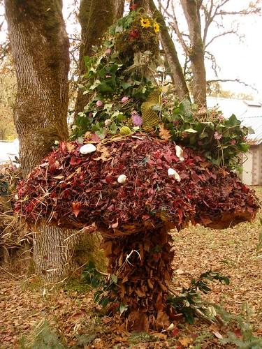 Eugene mushroom festival