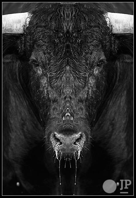 toro-izquierdo