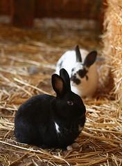 New bunny Tima