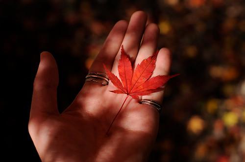 フリー画像| 葉っぱ| カエデ/もみじ| 手| 紅葉|       フリー素材|