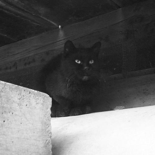 Today's Cat@20091210