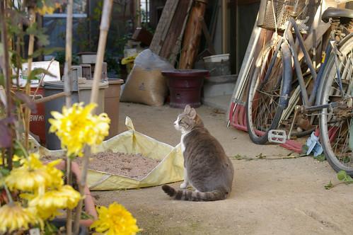 Today's Cat@20091227