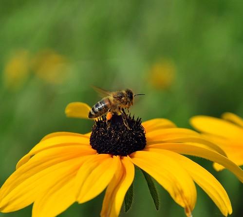 bee calm~working on