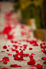 Carpet of rose petals (reelgeek) Tags: sanfrancisco love engagement proposal sofreakingcute lyonandbroadway awwwromance thatisoneorganizedmofo