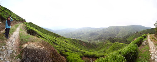 Along the trail of Gunung Cantik - Pano