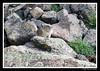 Colorado (David Swindler (ActionPhotoTours.com)) Tags: colorado durango
