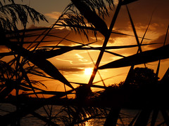 Sunsetting through the reeds (coxy2001) Tags: sunset sun colours tring platinumheartaward