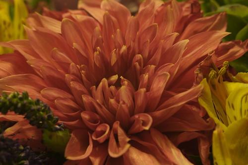 Virág Adobe RGB