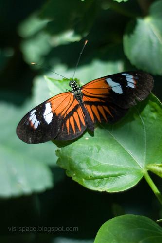 Butterfly Pavillion 07